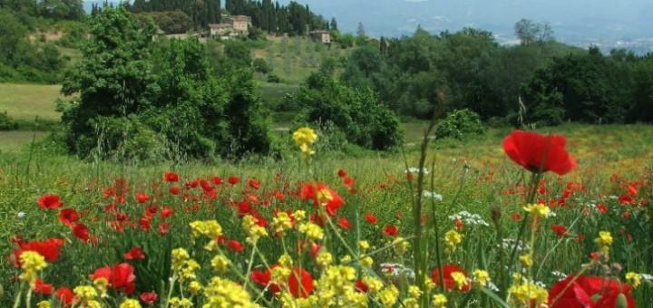 fioritura_sulla_via_degli_dei_nel_mugello