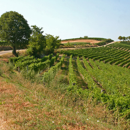 Wine & walking around Bolgheri